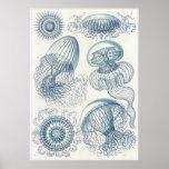 Ernst Haeckel-Kunst-Druck: Leptomedusae Plakatdrucke