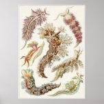 Ernst Haeckel-Kunst-Druck: Nudibranchia Poster