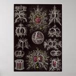 Ernst Haeckel-Kunst-Druck: Stephoidea Poster