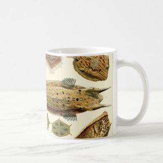 Ernst Haeckel Ostraciontes Boxfish Cowfish Kaffeetasse