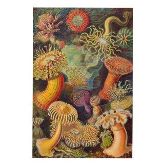 Ernst Haeckel-Seeanemonen-Marinesoldat: Actiniae Holzleinwand