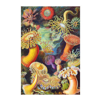 Ernst Haeckel-Seeanemonen-Marinesoldat: Actiniae Leinwanddruck