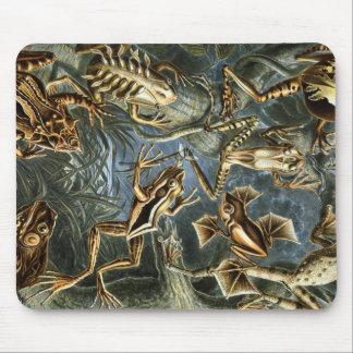 Ernst Haeckel-Vielzahl der exotischen Frösche: Mousepad