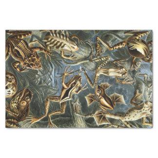 Ernst Haeckel-Vielzahl der exotischen Frösche: Seidenpapier