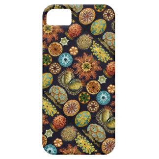 Ernst Haeckels Ascidiae Ozean-Leben iPhone 5 Hülle