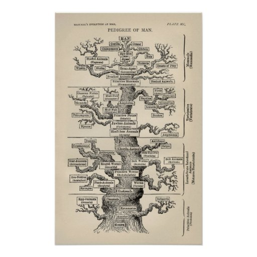 "Ernst Haeckels ""Baum des Lebens "" Plakate"