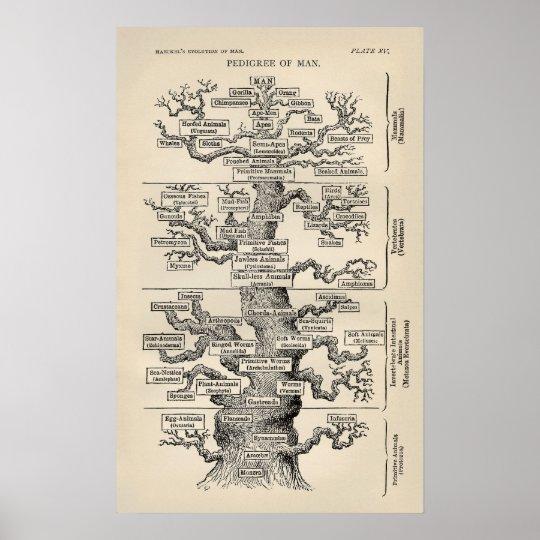 "Ernst Haeckels ""Baum des Lebens "" Poster"