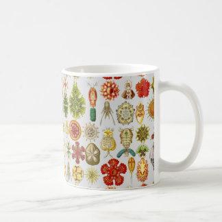 Ernst Haeckels ozeanische Wunder Kaffeetasse
