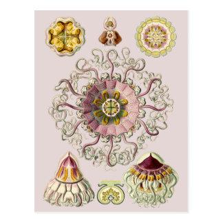 Ernst Haeckels Peromedusae Postkarte