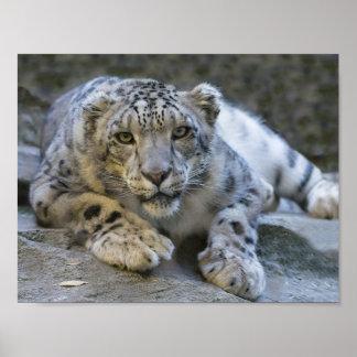 Ernstes Schnee-Leopard-Plakat Poster