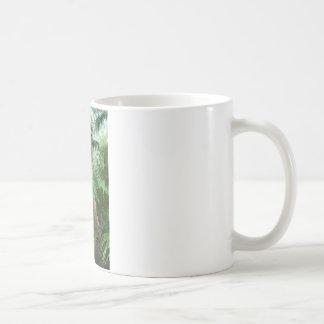 Ernte der frischen Kokosnüsse Kaffeetasse