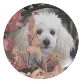 Erntedank-Boxer-Hundemelaminplatte Melaminteller