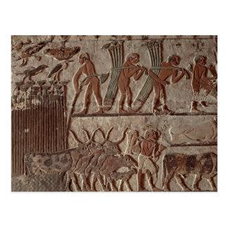 Ernten des Papyrusses und der Gruppe Kühe Postkarte