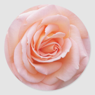Erröten die rosa Blumen Rose Runder Aufkleber