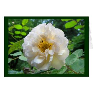 Errötende Rose danken Ihnen Karte