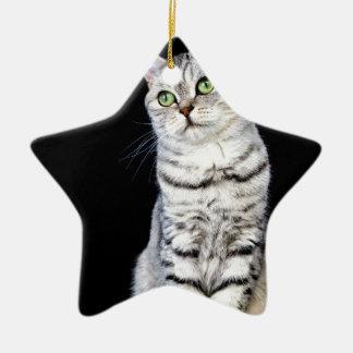 Erwachsene britische kurze Haarkatze auf schwarzem Keramik Ornament