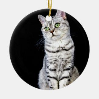 Erwachsene britische kurze Haarkatze auf schwarzem Rundes Keramik Ornament