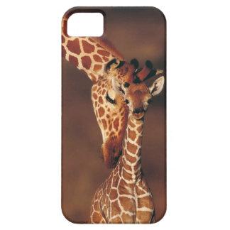 Erwachsene Giraffe mit Kalb (Giraffa camelopardali iPhone 5 Schutzhüllen