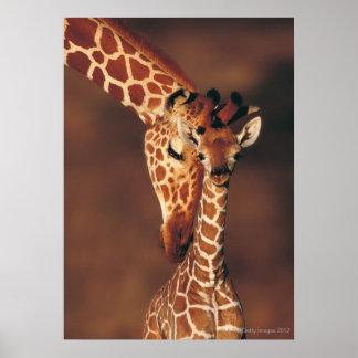 Erwachsene Giraffe mit Kalb (Giraffa camelopardali Poster