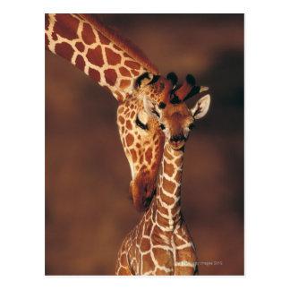 Erwachsene Giraffe mit Kalb (Giraffa Postkarten