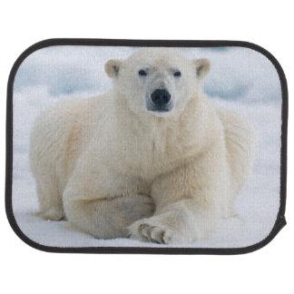 Erwachsene polare betreffen das SommerPackeis Automatte