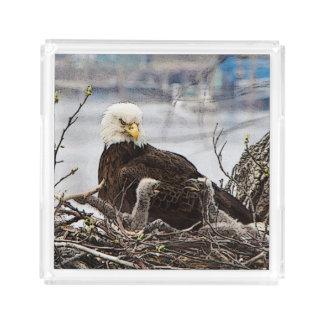 Erwachsener Weißkopfseeadler mit eaglets Acryl Tablett