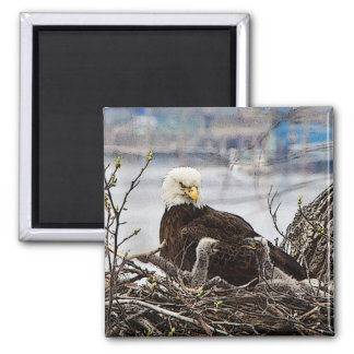Erwachsener Weißkopfseeadler mit eaglets Quadratischer Magnet