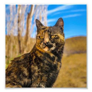 Erwachsenes wildes Katzen-Sitzen und Aufpassen Fotodruck