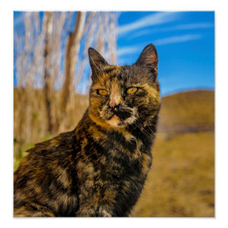 Erwachsenes wildes Katzen-Sitzen und Aufpassen Poster