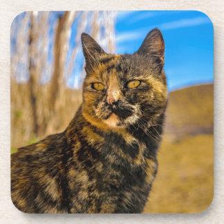 Erwachsenes wildes Katzen-Sitzen und Aufpassen Untersetzer