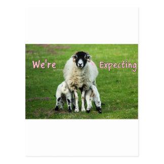 Erwartung Doppelmädchen-Mitteilungs-Mutter u. der Postkarte