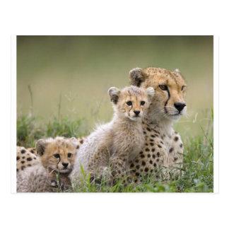 Erweiternde Geparde Postkarte