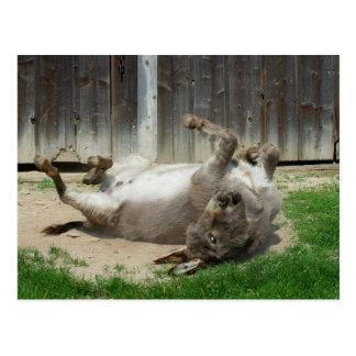Esel, der ein Bad hat Postkarte