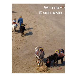Esel-Fahrten auf Whitby Strand, North Yorkshire Postkarte