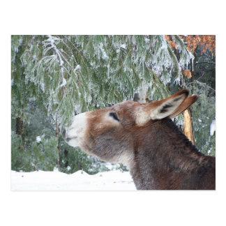 Esel-Feiertags-Postkarte Postkarten