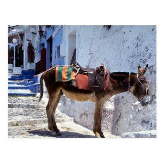 Esel, Fira Santorini, Griechenland Postkarte
