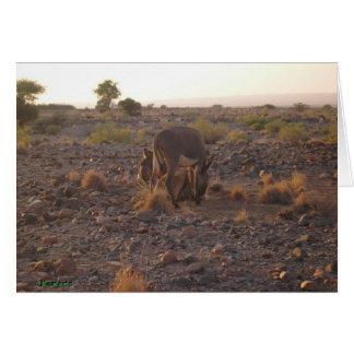 Esel in Afrika Karte