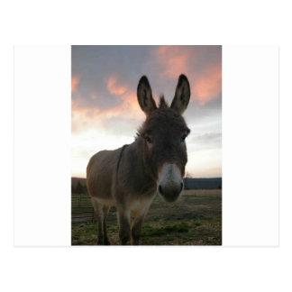 Esel-Kunst Postkarte