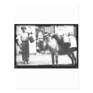 Esel-Lieferung Postkarte