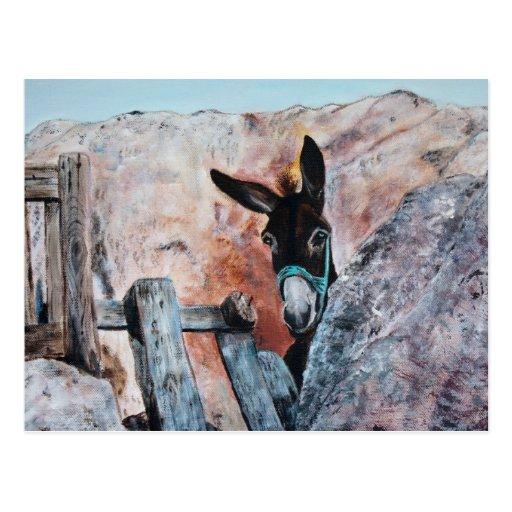 Esel Postkarte