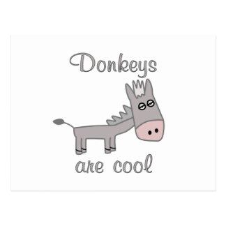 Esel sind cool postkarte