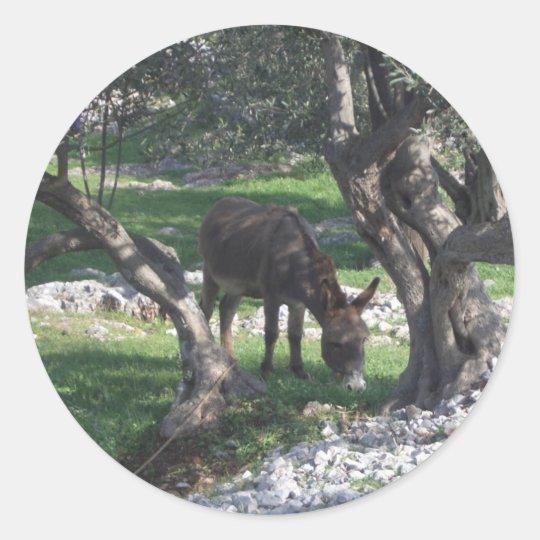 Esel unter Olivenbäumen Split Croatia Natur pur Runder Aufkleber