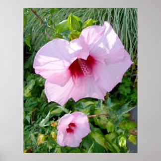 Essbare riesige Hibiskus-Blume Poster