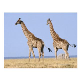 Etosha Nationalpark, Namibia Postkarte