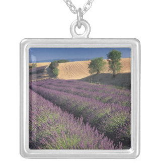EU, Frankreich, Provence, Lavendelfelder 3 Versilberte Kette