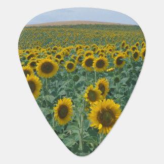 EU, Frankreich, Provence, Sonnenblumefeld Plektron