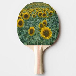 EU, Frankreich, Provence, Sonnenblumefeld Tischtennis Schläger