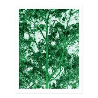 Eukalyptus-Baum-Fotomalereipostkarte Postkarte