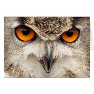 Eulen-Augen, Augen der Eagle-Eulen-Fotografie Karte