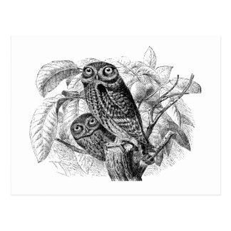 Eulen-Eulen-Baum-Vintager hölzerner Stich Postkarte